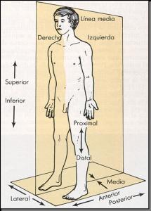 4-1 anatomia topografica