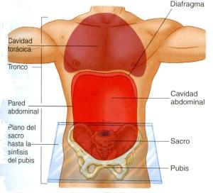 4-14 abdomen anteror