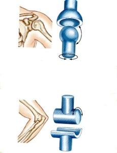 4-24 articulacion bola y bisabra