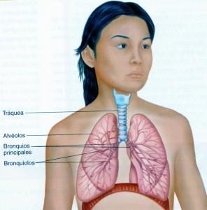 4-31 pulmones
