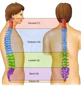 4-9 columna vertebral