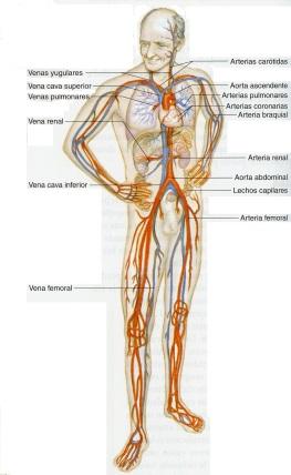 4-42 sistema circulatorio706