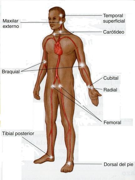 4-44 pulso central y periferico