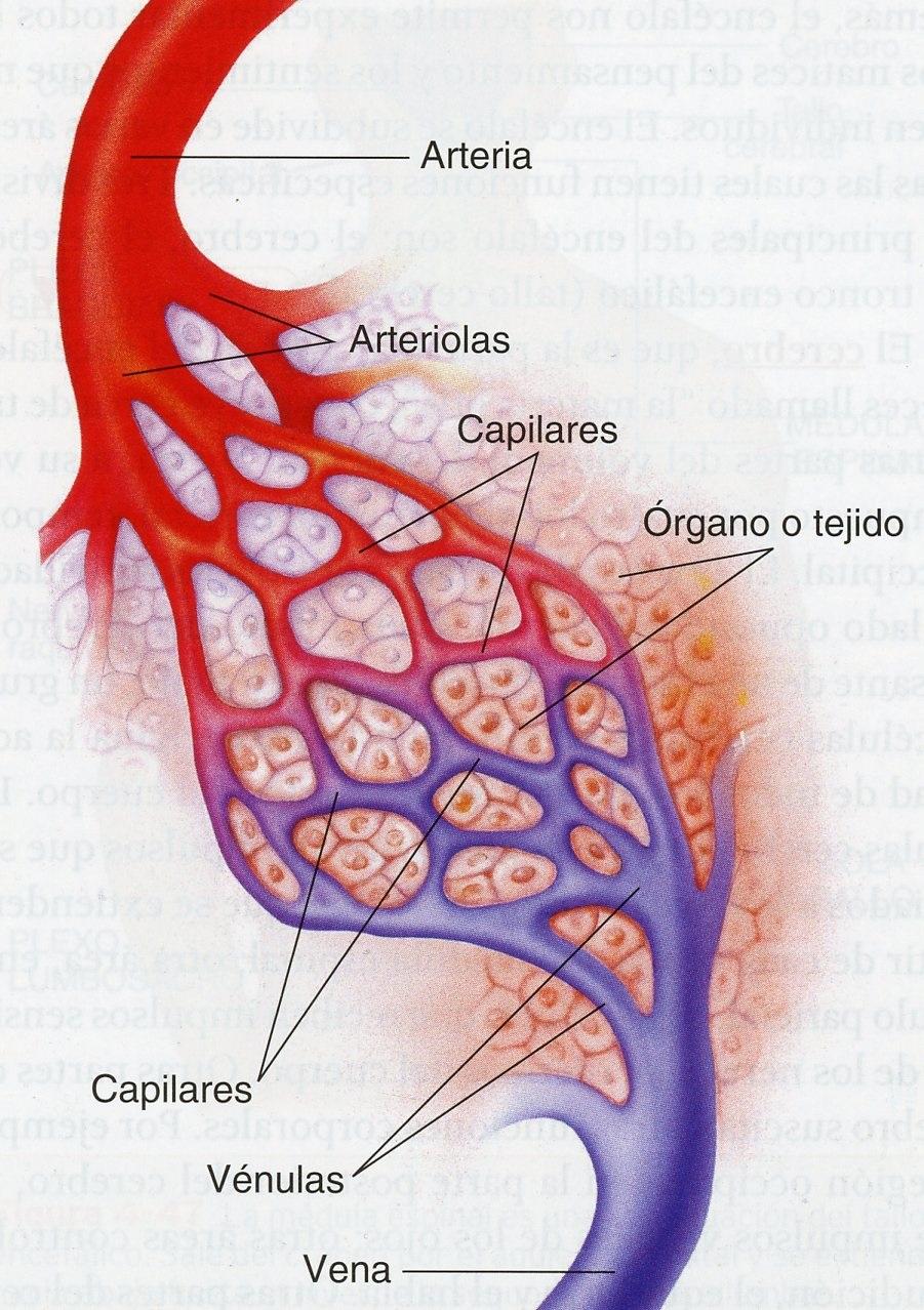 arterias | EIFE-FUNDETAM