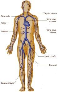 Mortales del cuerpo humano venas